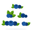 berries blueberries flat material design isolated vector image
