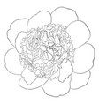 beautiful monochrome black and white peony flower vector image vector image