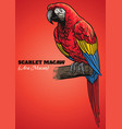 scarlet macaw parrot vector image vector image