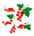 set of cartoon red currant berries isolated on vector image vector image