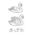 set swans in contours - udults and babies vector image vector image