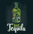 bottle tequila with glass cactus salt lime vector image vector image