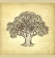 ink sketch of oak without leaves vector image vector image