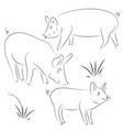 sketch of pig drawing pig and pork pig symbol vector image vector image