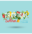 tropical design with exotic fruits summer vector image vector image