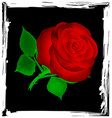 abstract black and red rose vector image vector image