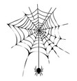 black thin web with spider isolated vector image