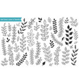 hand drawn leaves and branches vector image