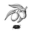 olive branch hand drawn vector image vector image