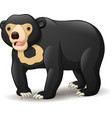 sun bear isolated on white backgro vector image
