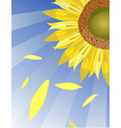 sun flower background vector image vector image