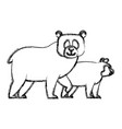bears cartoon animal vector image vector image