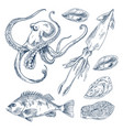 fish and marine creatures as seafood poster vector image