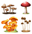 Different species of mushrooms