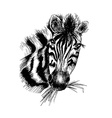 zebra in eps vector image