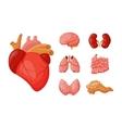 Internal organs vector image vector image