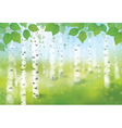 spring birches forest vector image vector image