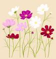 cosmos flowers vector image