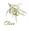 hand-drawn logo olives vector image vector image