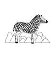 wild zebra isolated icon vector image