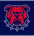 bulldog in spiked collar mascot vector image