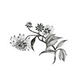 hand drawn monochrome flowers isolated on white vector image