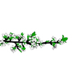 blooming branch vector image vector image