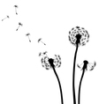 Dandelion silhouettes black and white vector image vector image