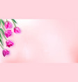 floral background with bouquet of tulips top view vector image