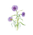 hand drawn purple flower isolated on white vector image vector image