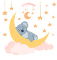 baby koala sleeping vector image
