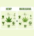 hemp vs marijuana infographics cannabis leaf low vector image