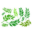 laurel branches set vector image vector image