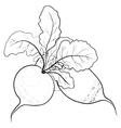 radish with leaves contours vector image