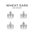set line icons wheat ears vector image vector image