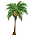 Palm tree with coconut vector image