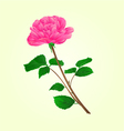 Pink rose stem with leaves and blossoms vector image vector image