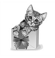 cat in a gift box cute kitten wall stickers vector image vector image