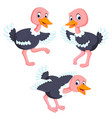 collection of the ostrich vector image vector image