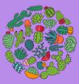 succulents decorative cacti green plants vector image vector image