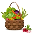 Vegetables in basket vector image vector image