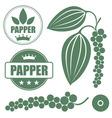 Black pepper vector image vector image