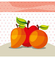 fruits fresh organic healthy orange mango apple vector image
