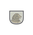 Lion Big Cat Head Side Shield vector image vector image