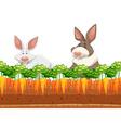 Two rabbits in carrot garden vector image