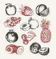 fruits - modern hand drawn design vector image vector image