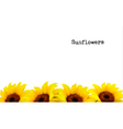 Nature Background With Yellow Sunflowers vector image vector image
