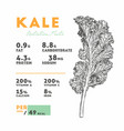 nutrition facts kale hand draw sketch vector image vector image