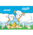 Sheep ram chicken vector image