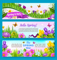 spring flower greeting banner set design vector image vector image